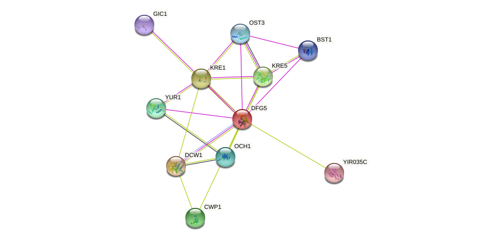 DFG5 protein (Saccharomyces cerevisiae) - STRING interaction network