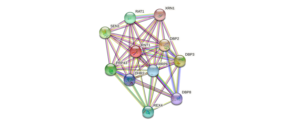 RNT1 protein (Saccharomyces cerevisiae) - STRING interaction network