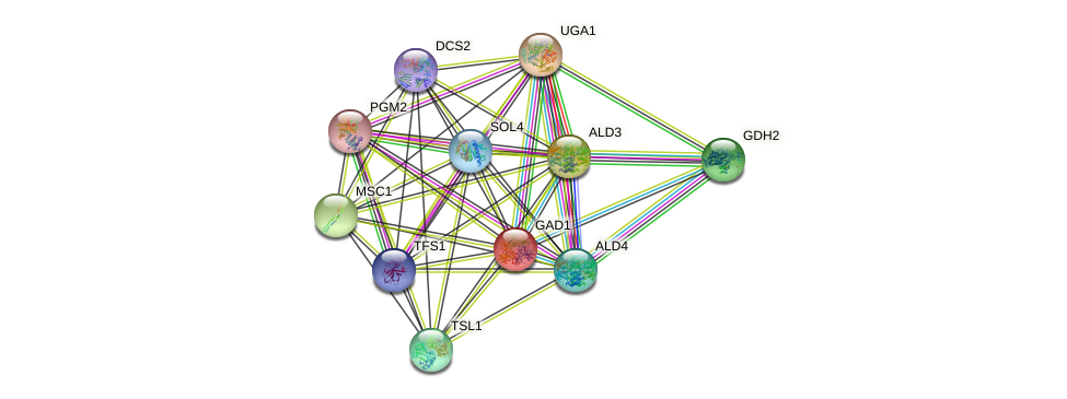 GAD1 protein (Saccharomyces cerevisiae) - STRING interaction network