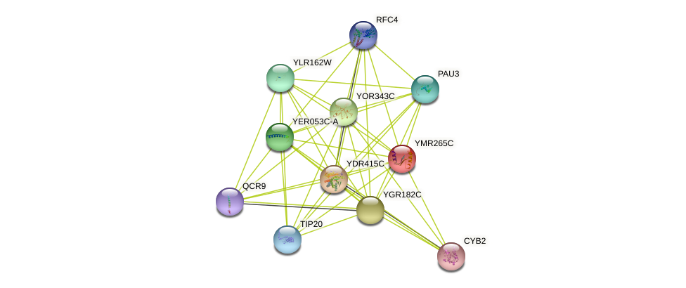 YMR265C protein (Saccharomyces cerevisiae) - STRING interaction network