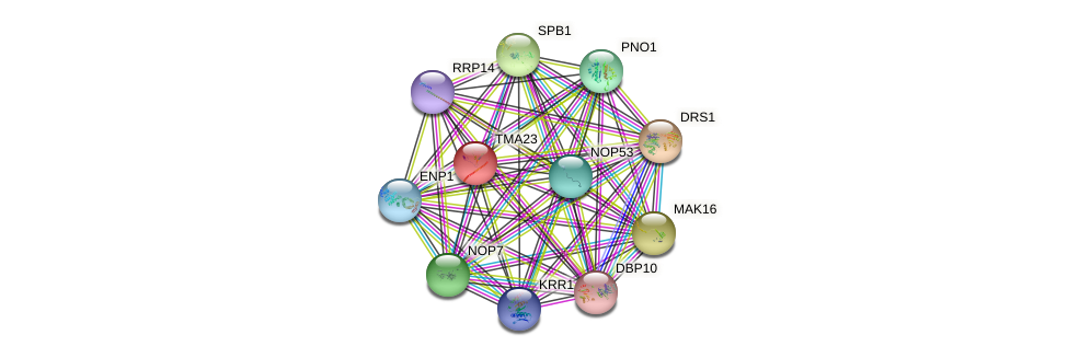 TMA23 protein (Saccharomyces cerevisiae) - STRING interaction network