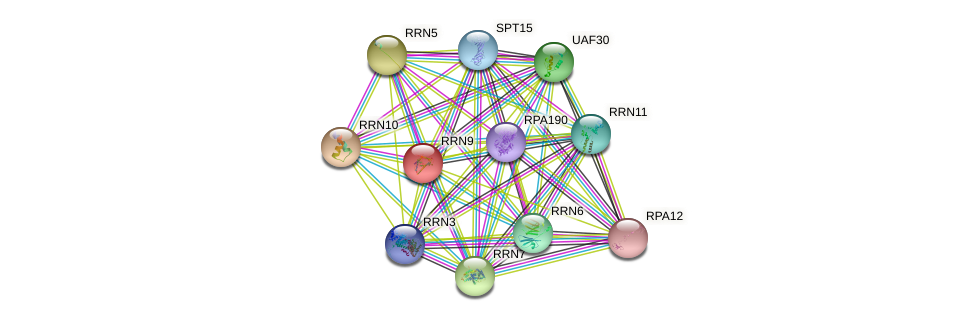 RRN9 protein (Saccharomyces cerevisiae) - STRING interaction network