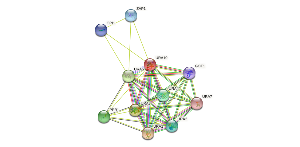URA10 protein (Saccharomyces cerevisiae) - STRING interaction network
