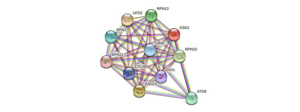 DSK2 protein (Saccharomyces cerevisiae) - STRING interaction network