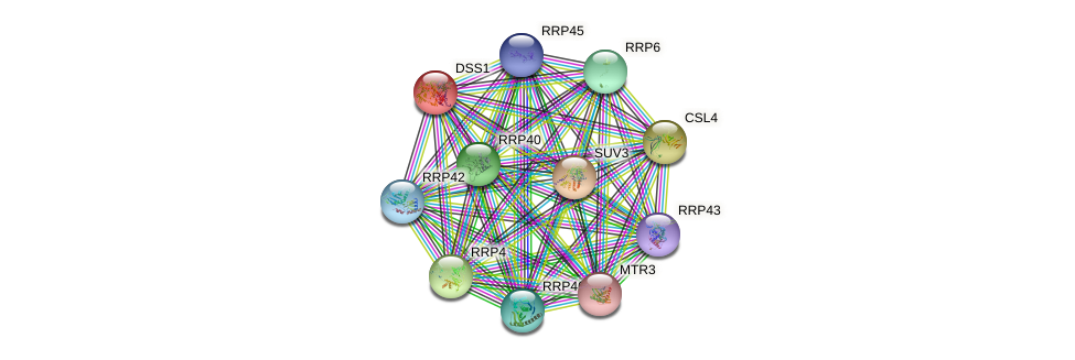 DSS1 protein (Saccharomyces cerevisiae) - STRING interaction network