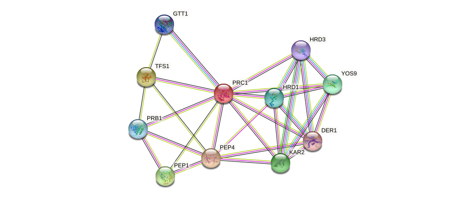 PRC1 protein (Saccharomyces cerevisiae) - STRING interaction network