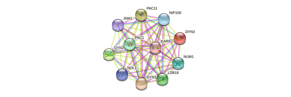 DYN3 protein (Saccharomyces cerevisiae) - STRING interaction network