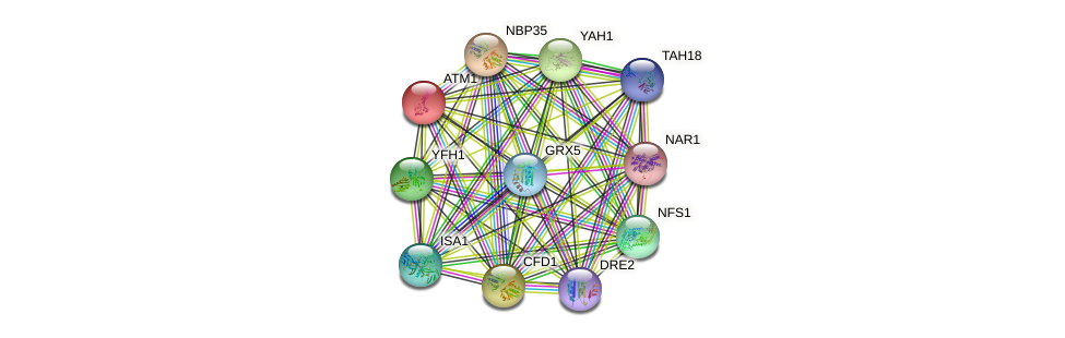 ATM1 protein (Saccharomyces cerevisiae) - STRING interaction network