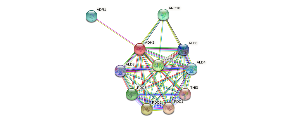 ADH2 protein (Saccharomyces cerevisiae) - STRING interaction network