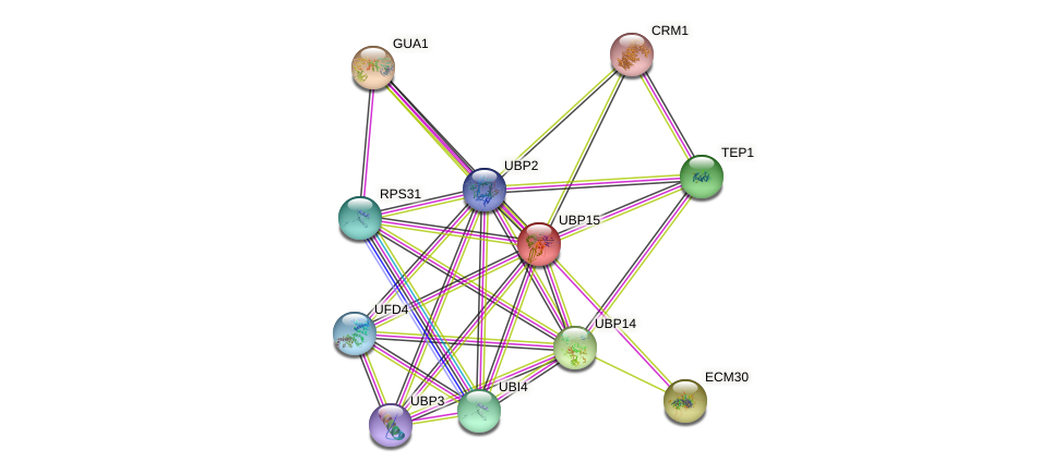 UBP15 protein (Saccharomyces cerevisiae) - STRING interaction network