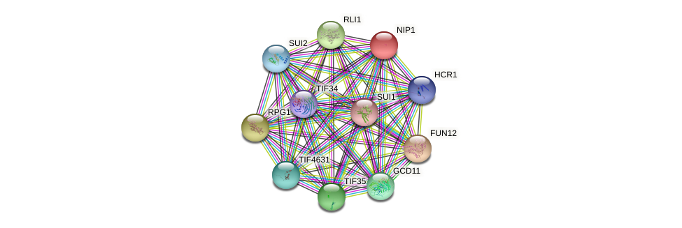 NIP1 protein (Saccharomyces cerevisiae) - STRING interaction network