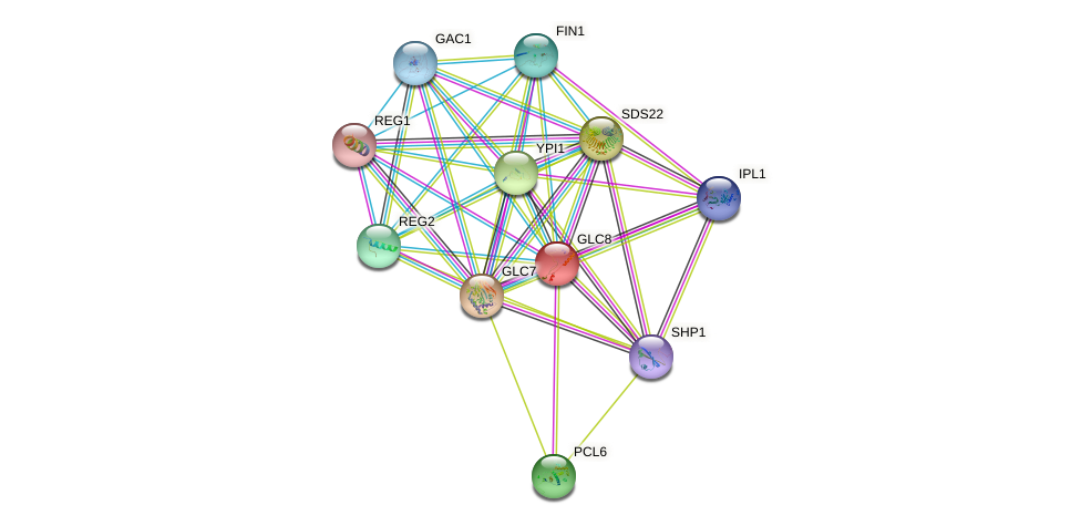 GLC8 protein (Saccharomyces cerevisiae) - STRING interaction network