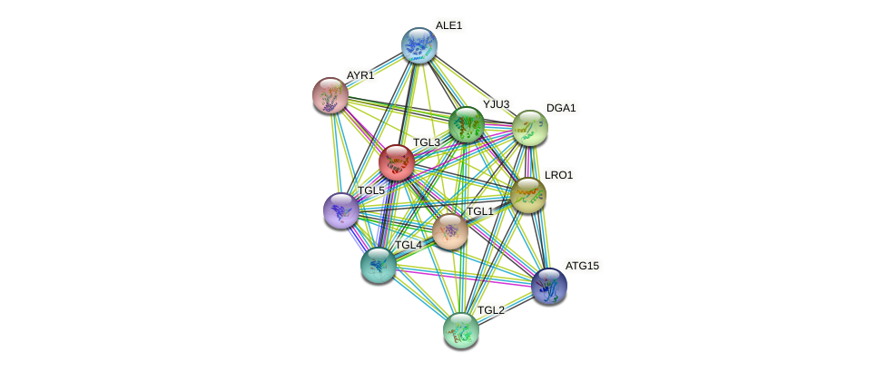 TGL3 protein (Saccharomyces cerevisiae) - STRING interaction network