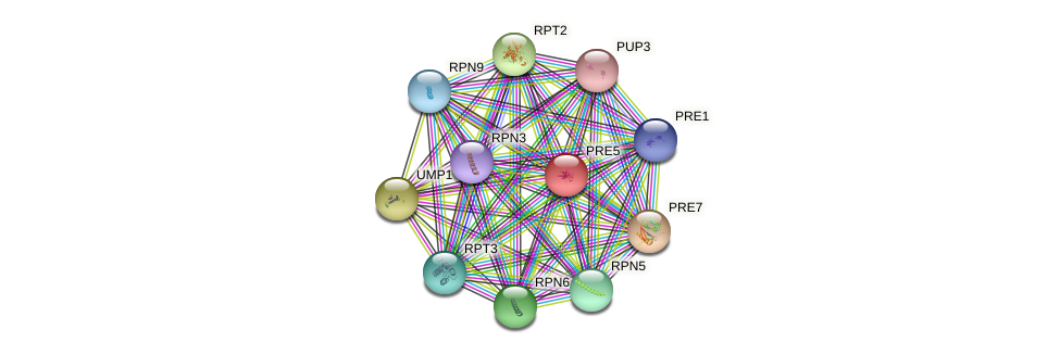 PRE5 protein (Saccharomyces cerevisiae) - STRING interaction network