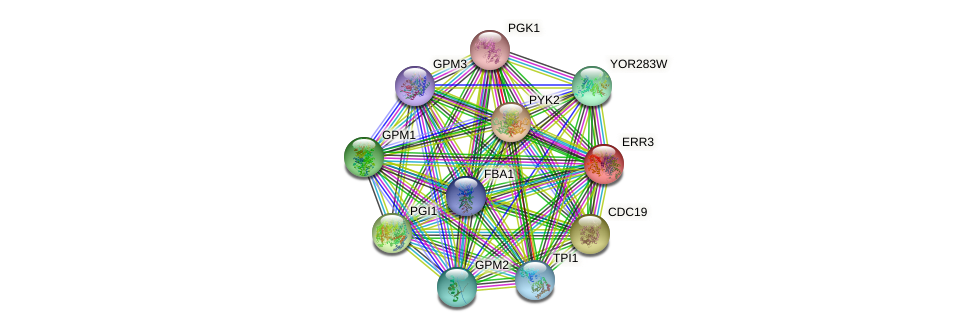 ERR3 protein (Saccharomyces cerevisiae) - STRING interaction network