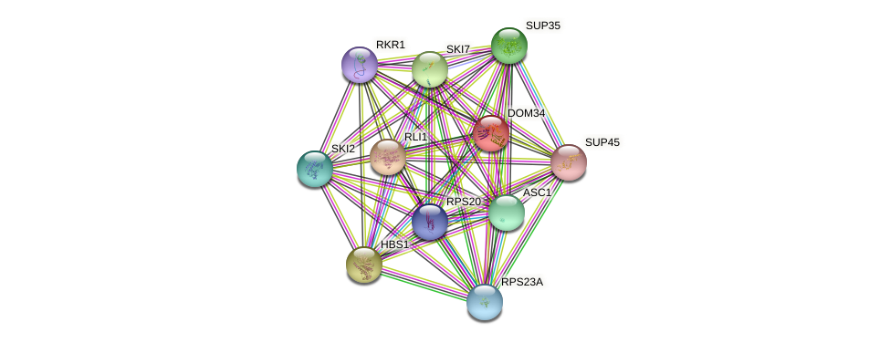 DOM34 protein (Saccharomyces cerevisiae) - STRING interaction network