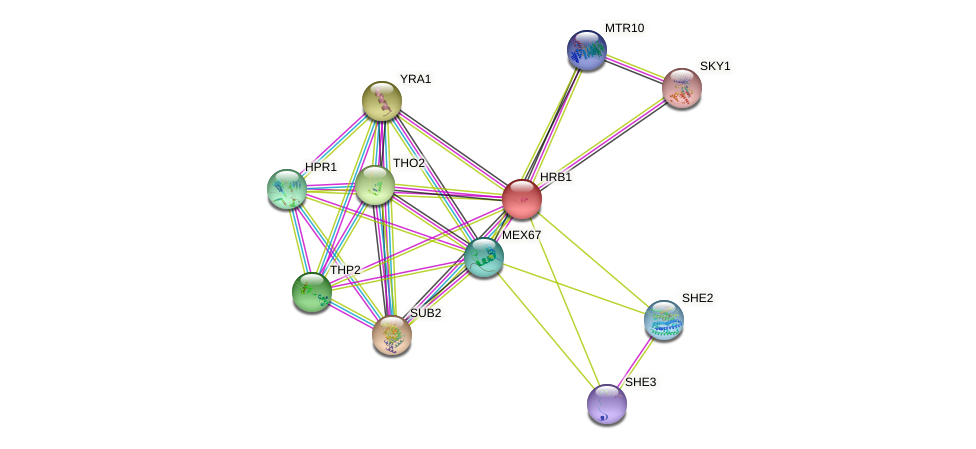 HRB1 protein (Saccharomyces cerevisiae) - STRING interaction network