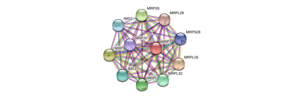 MRP7 protein (Saccharomyces cerevisiae) - STRING interaction network