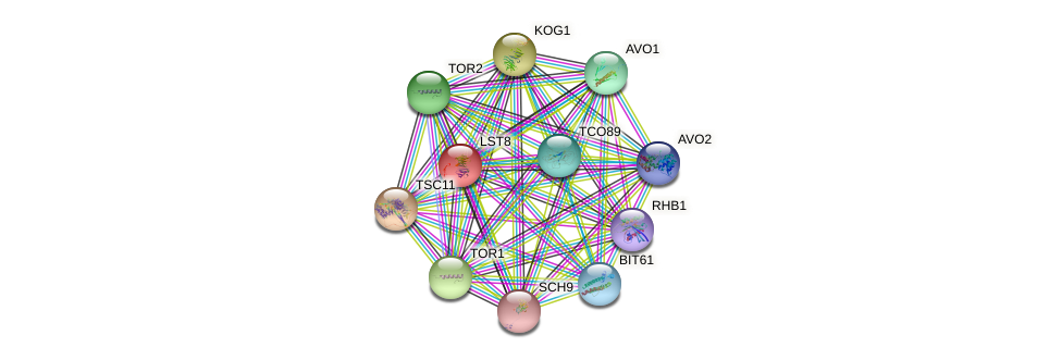 LST8 protein (Saccharomyces cerevisiae) - STRING interaction network