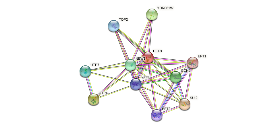 HEF3 protein (Saccharomyces cerevisiae) - STRING interaction network