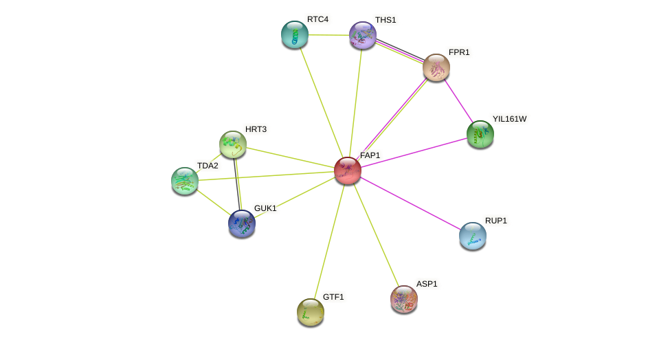 FAP1 protein (Saccharomyces cerevisiae) - STRING interaction network