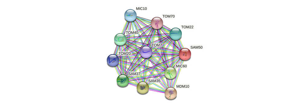 SAM50 protein (Saccharomyces cerevisiae) - STRING interaction network