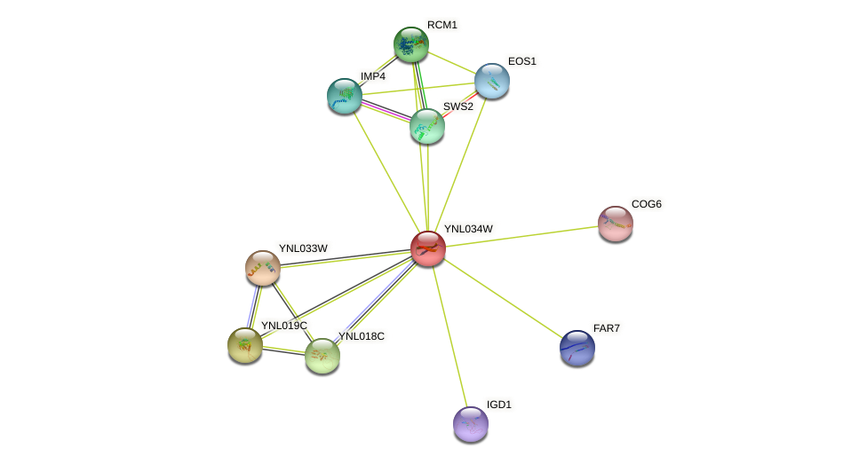 YNL034W protein (Saccharomyces cerevisiae) - STRING interaction network