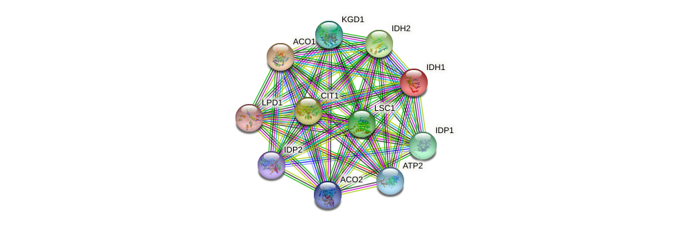 IDH1 protein (Saccharomyces cerevisiae) - STRING interaction network