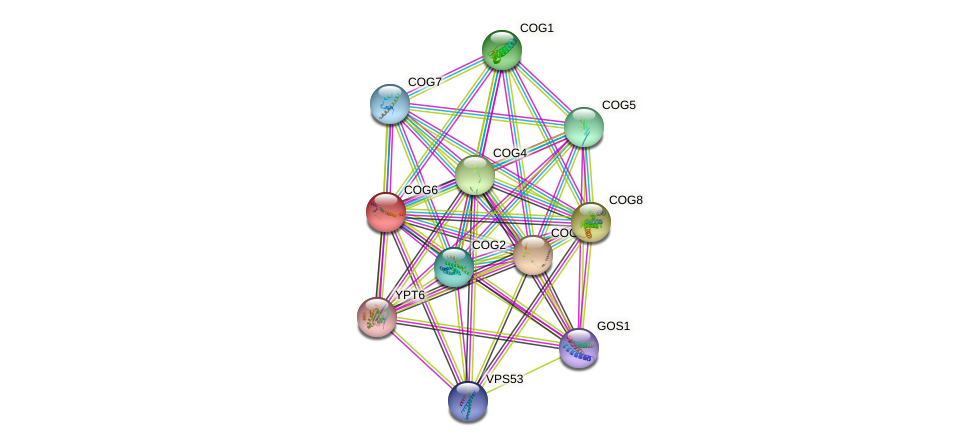 COG6 protein (Saccharomyces cerevisiae) - STRING interaction network