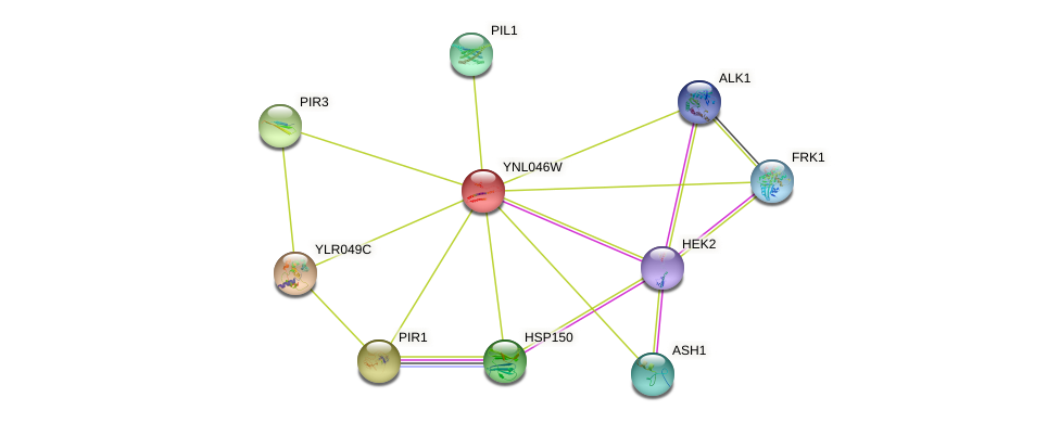 YNL046W protein (Saccharomyces cerevisiae) - STRING interaction network
