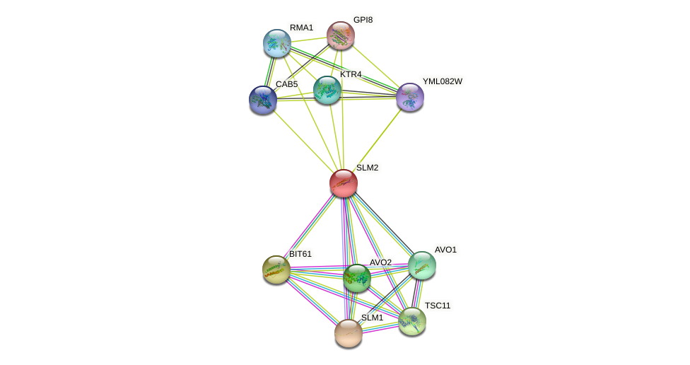 SLM2 protein (Saccharomyces cerevisiae) - STRING interaction network