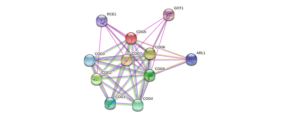 COG5 protein (Saccharomyces cerevisiae) - STRING interaction network