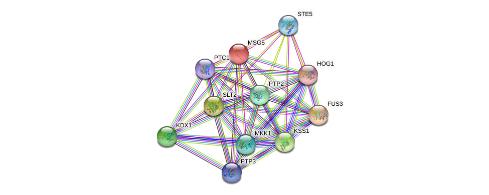 MSG5 protein (Saccharomyces cerevisiae) - STRING interaction network
