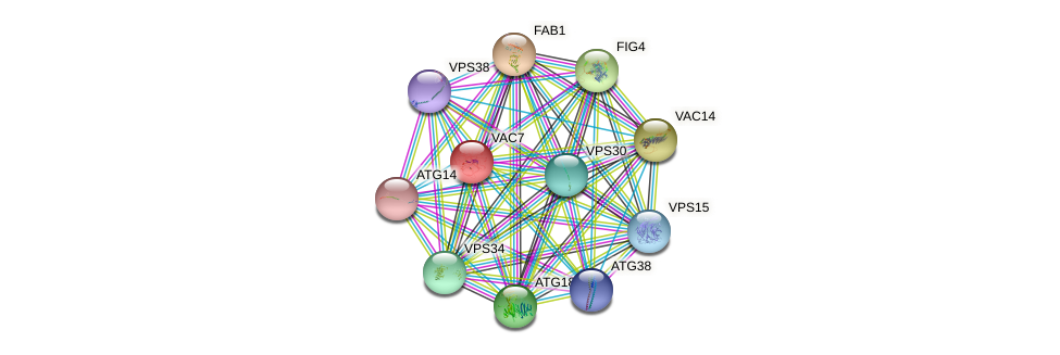 VAC7 protein (Saccharomyces cerevisiae) - STRING interaction network
