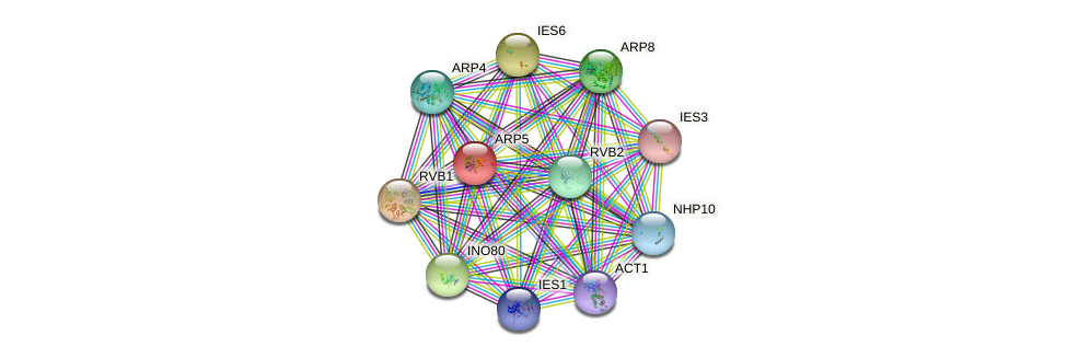 ARP5 protein (Saccharomyces cerevisiae) - STRING interaction network