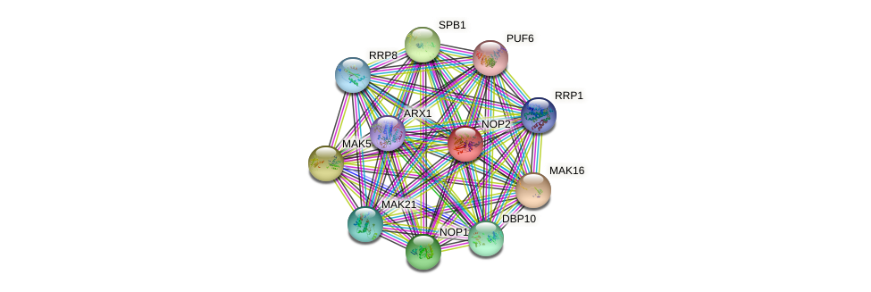 NOP2 protein (Saccharomyces cerevisiae) - STRING interaction network