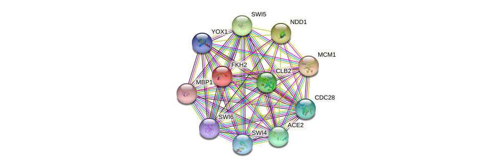 FKH2 protein (Saccharomyces cerevisiae) - STRING interaction network