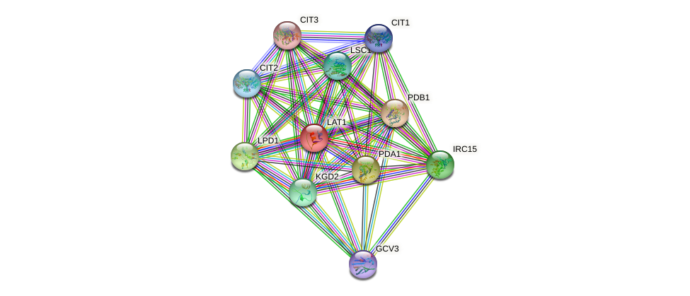 LAT1 protein (Saccharomyces cerevisiae) - STRING interaction network
