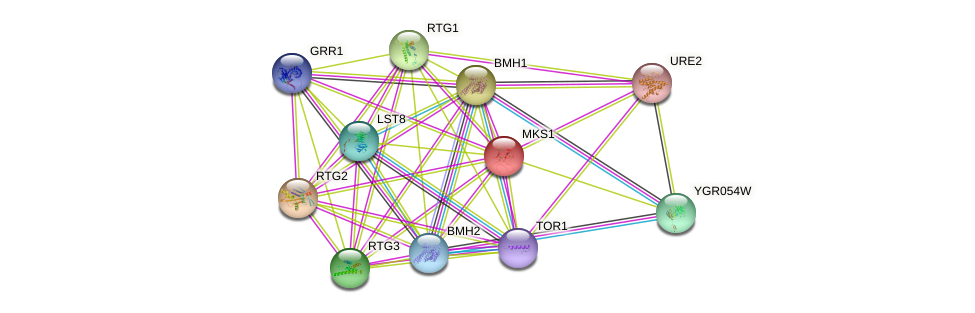 MKS1 protein (Saccharomyces cerevisiae) - STRING interaction network