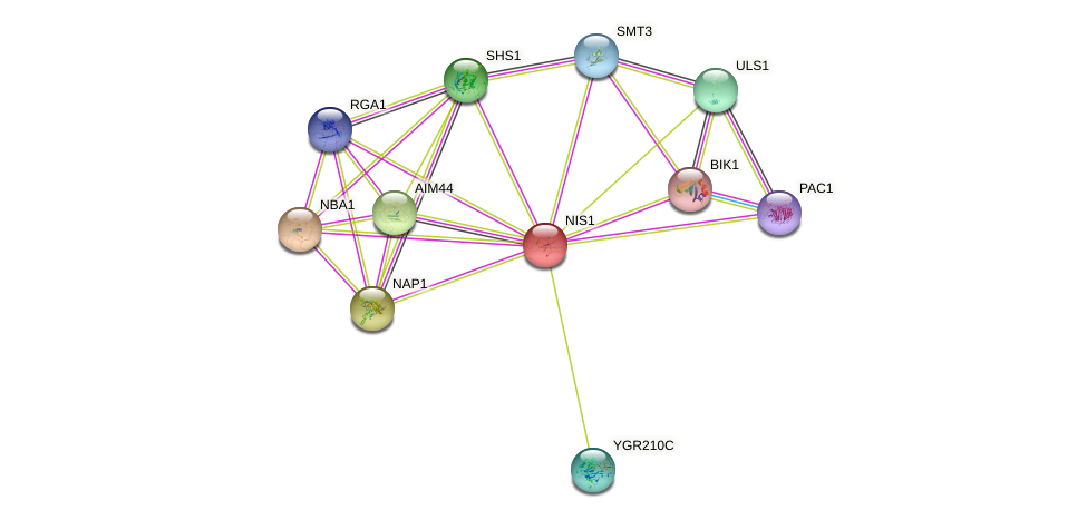 NIS1 protein (Saccharomyces cerevisiae) - STRING interaction network