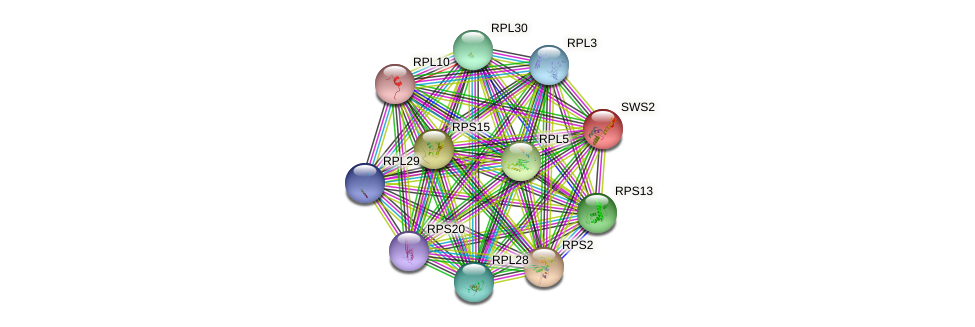 SWS2 protein (Saccharomyces cerevisiae) - STRING interaction network