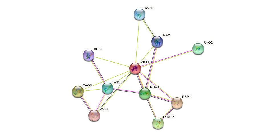 MKT1 protein (Saccharomyces cerevisiae) - STRING interaction network