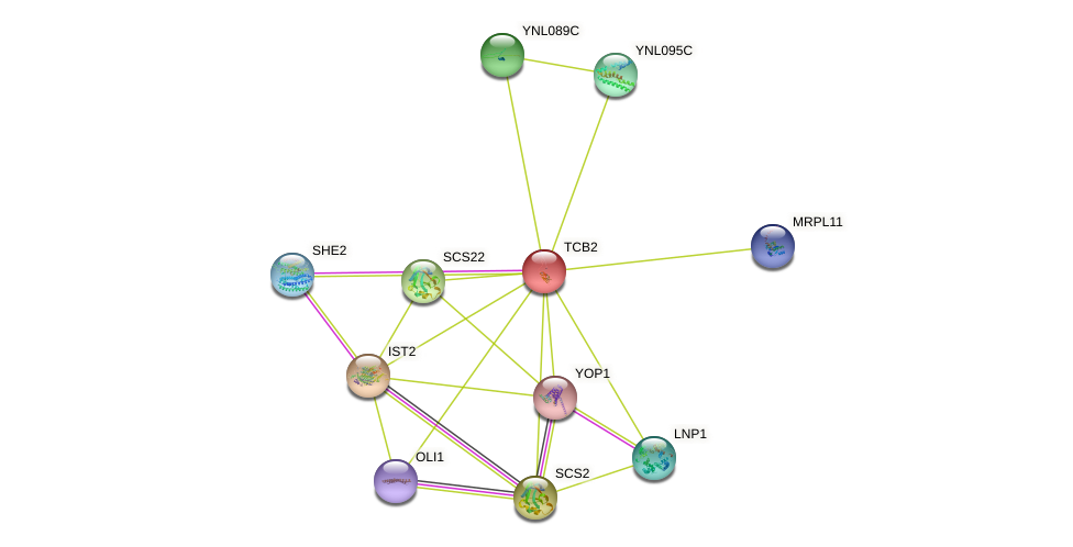 TCB2 protein (Saccharomyces cerevisiae) - STRING interaction network