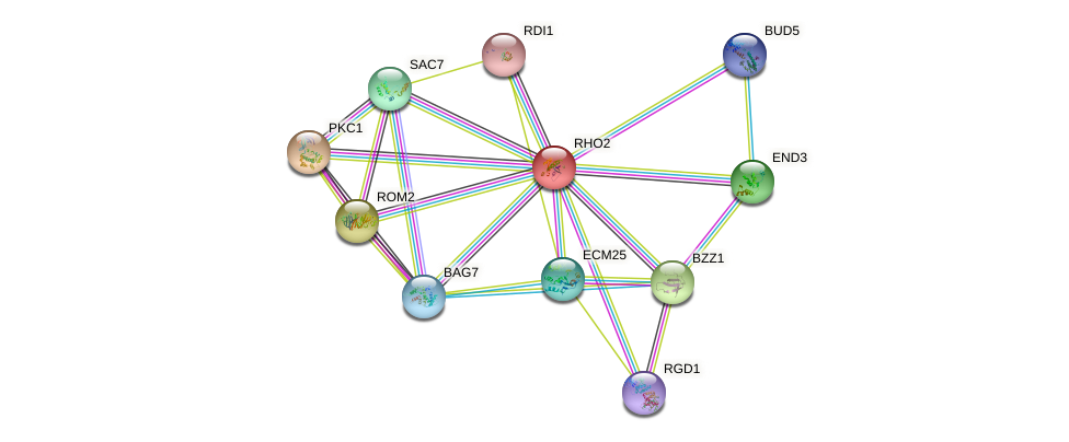 RHO2 protein (Saccharomyces cerevisiae) - STRING interaction network
