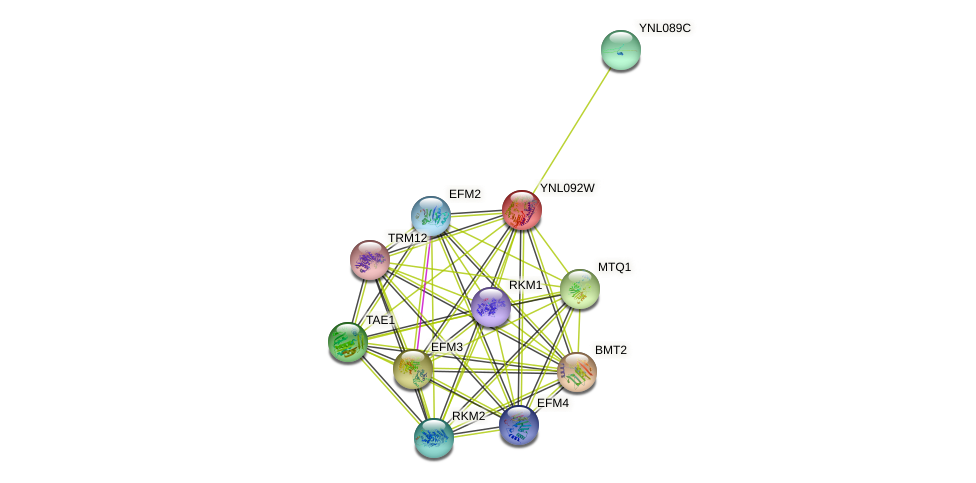 YNL092W protein (Saccharomyces cerevisiae) - STRING interaction network