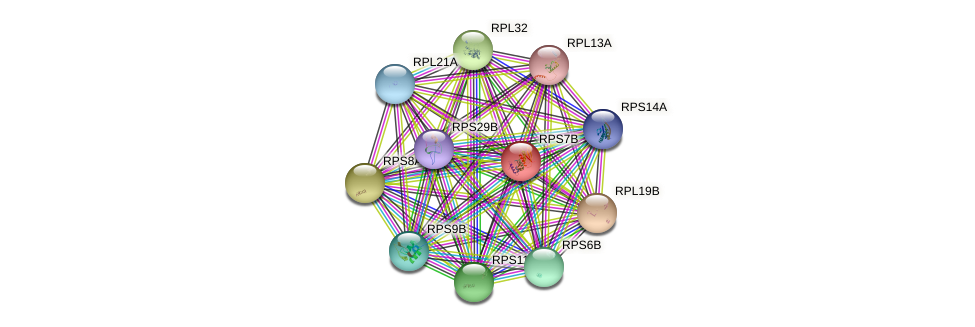 RPS7B protein (Saccharomyces cerevisiae) - STRING interaction network
