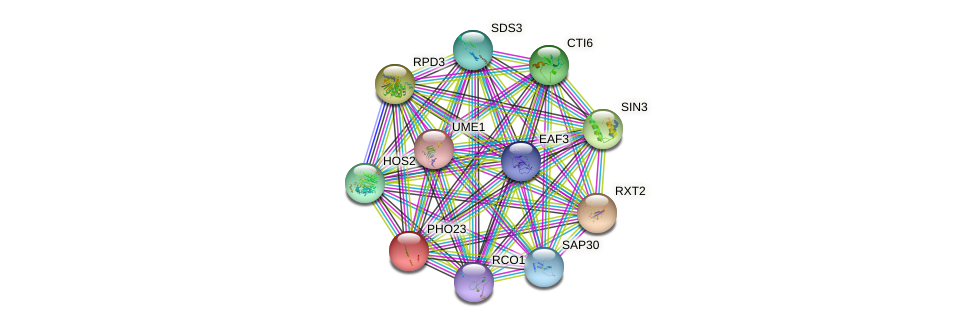 PHO23 protein (Saccharomyces cerevisiae) - STRING interaction network