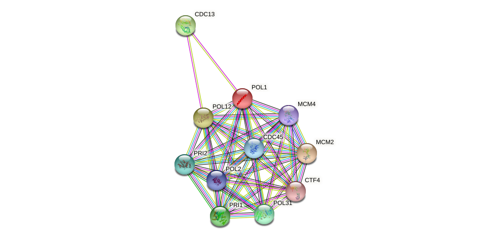 POL1 protein (Saccharomyces cerevisiae) - STRING interaction network
