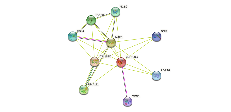 YNL108C protein (Saccharomyces cerevisiae) - STRING interaction network