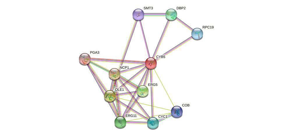 CYB5 protein (Saccharomyces cerevisiae) - STRING interaction network